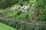 scot - cawdor garden, peonies