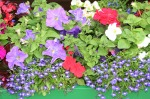scot- flowerbox