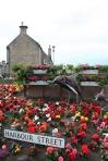 scot - nairn street, dolphin flowers