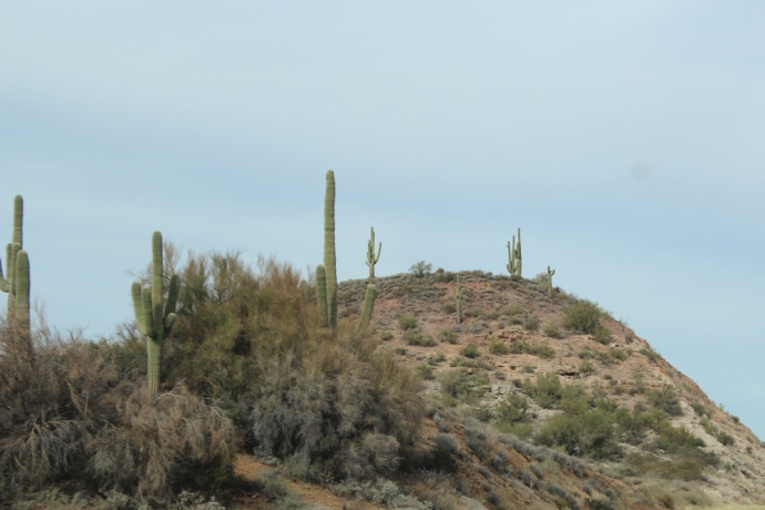 AZ, Cactus on hill