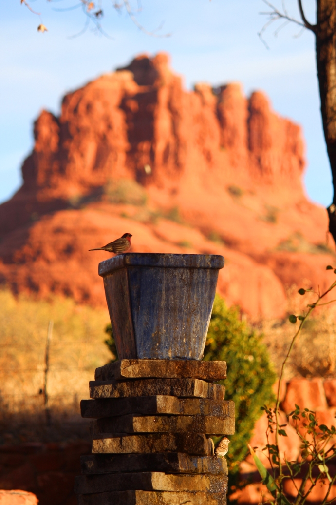 AZ, Red Agave bird bath, bell rock