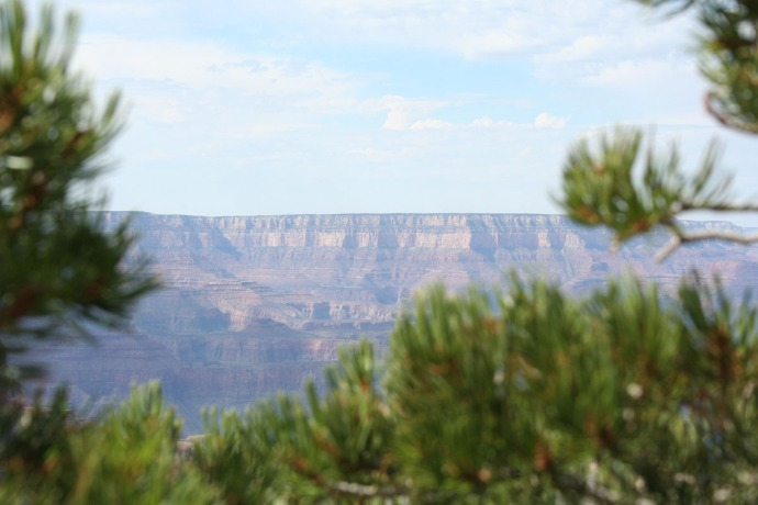 grand canyon hori, tree foreg