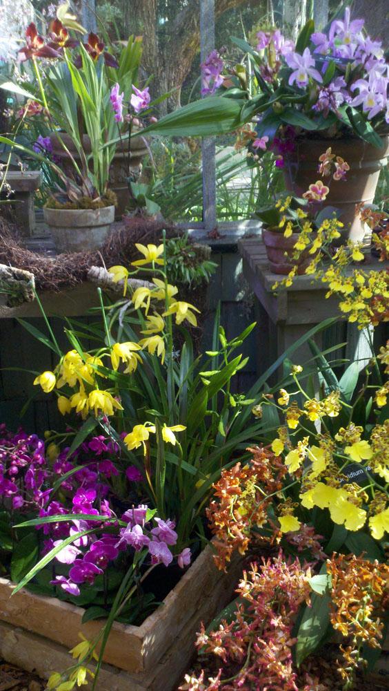 Lv, bellagio orchids vert