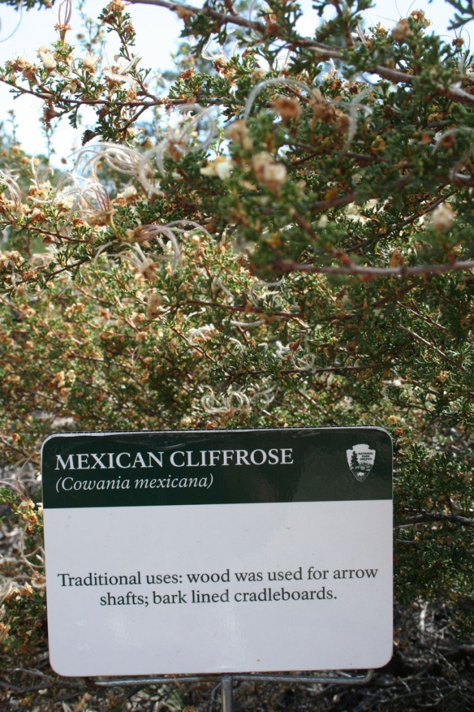 mexican cliffrose sign