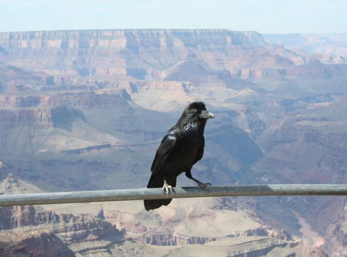 raven, balus at GC