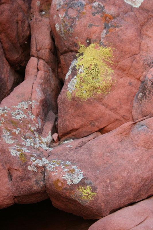 valley of fire rock lichen
