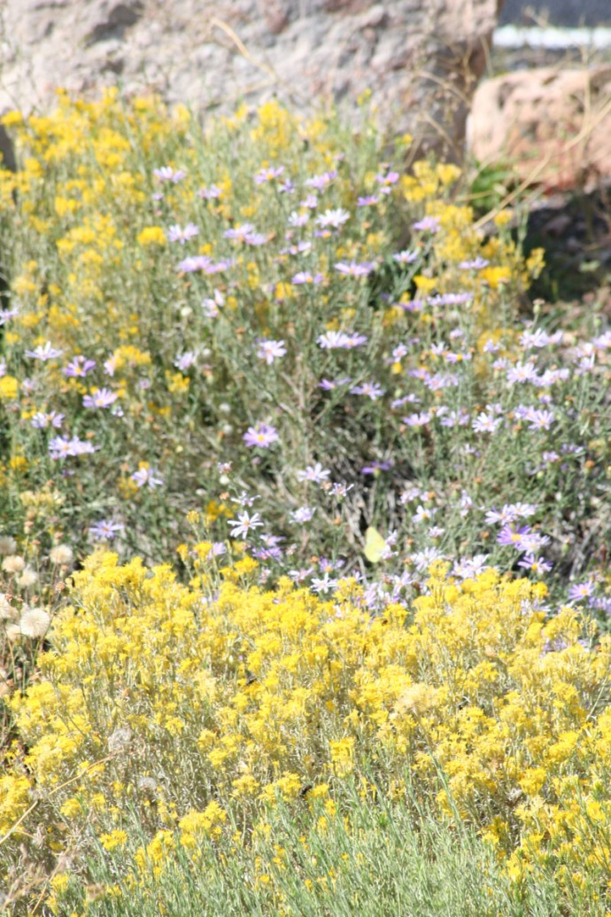 yellow & aster flowers