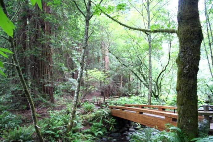 Asian-style bridge over creek