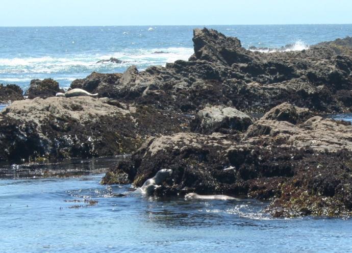 Glass Bch-seal climbing rock