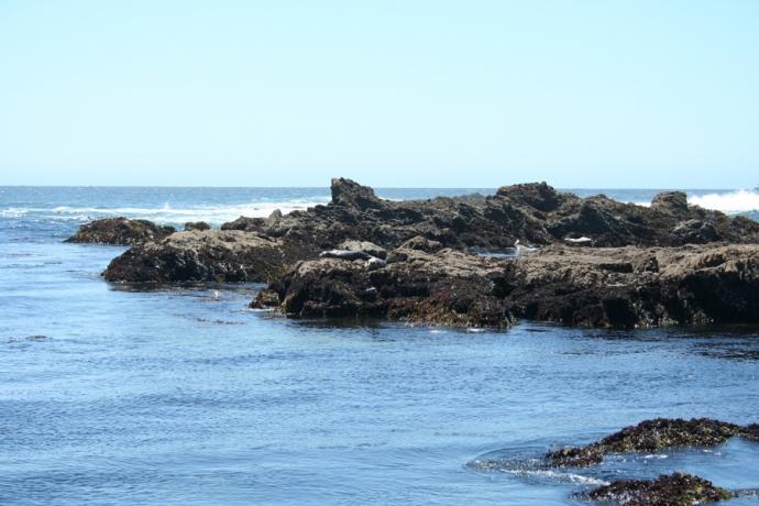 Glass Bch-seals on rock