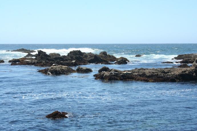 Glass Bch-seals on rocks 2