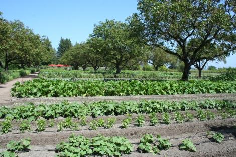 kendall-culinary garden