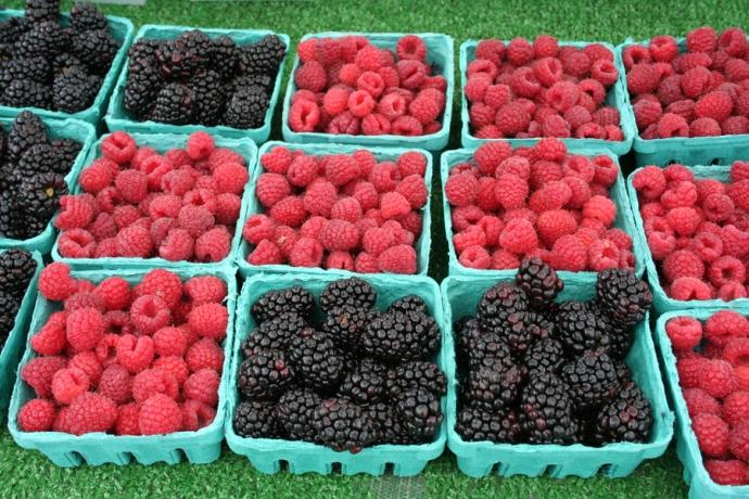 Marin FM-rasp:blackberries