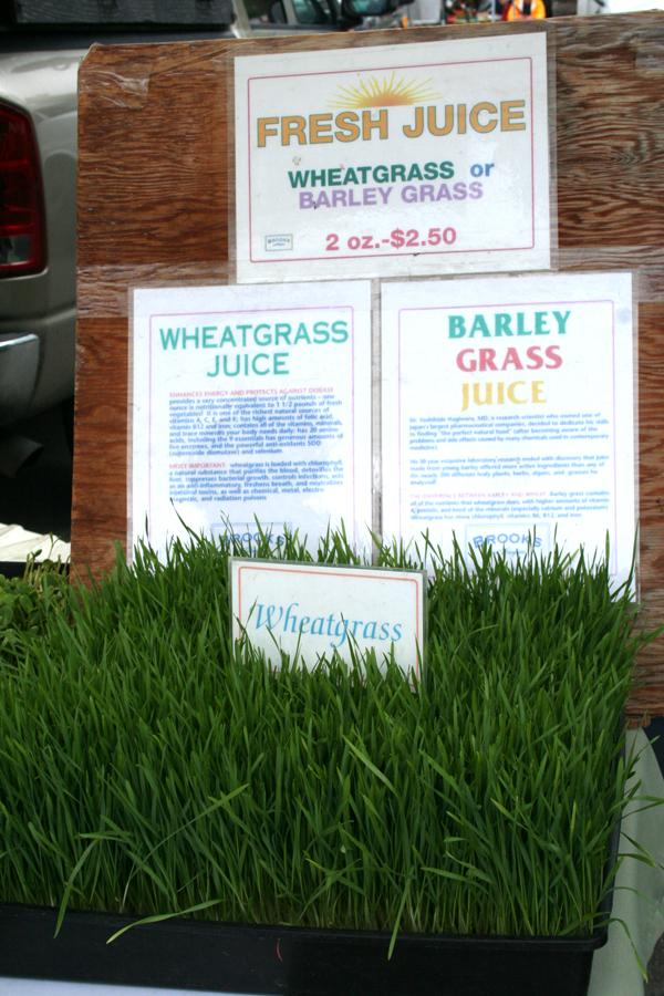 Marin FM-wheat grass