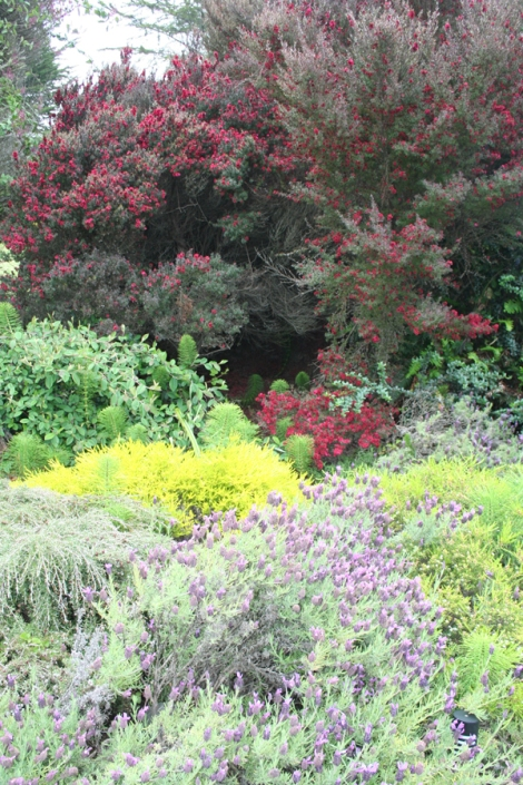 Mendo-lavender & flowers