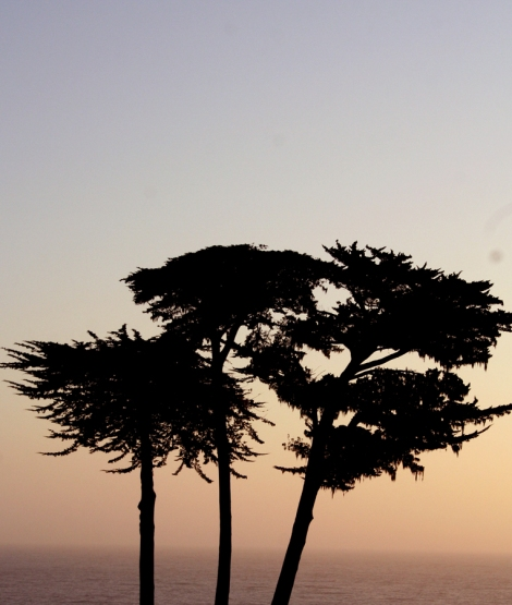Mendo-trees on shore