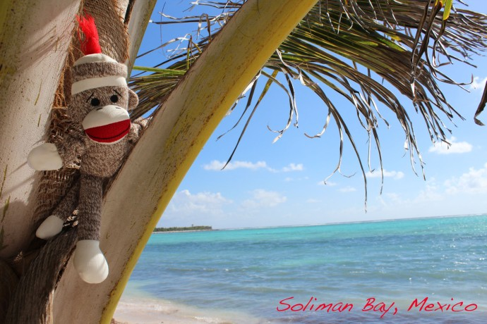 Monkey in tree, Soliman Bay