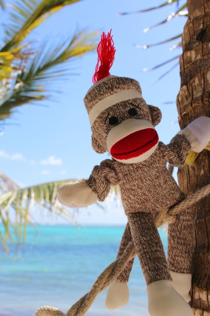 Monkey in tree, vert