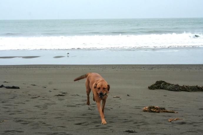 Muir, beach dog greeting