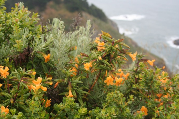 muir, org flowers, rosemary