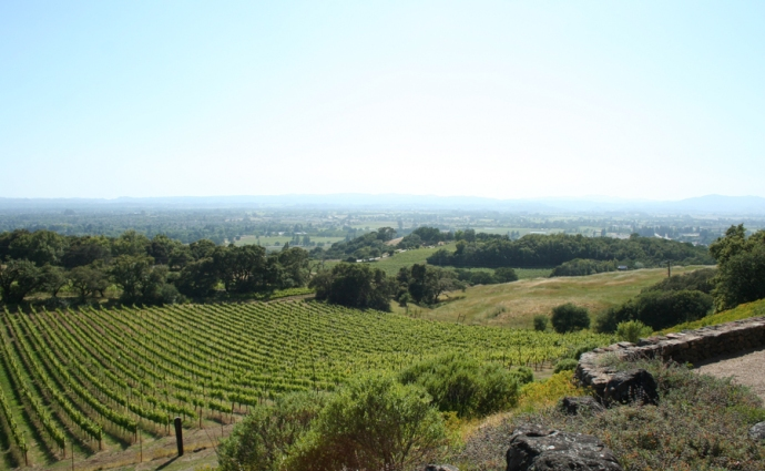 Paradise-vineyard view