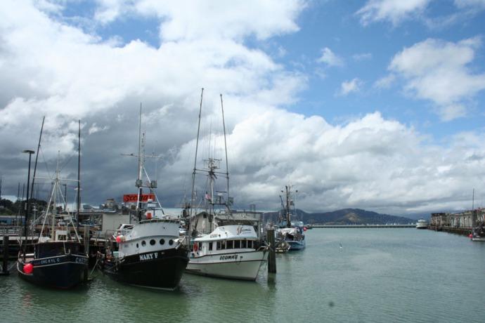 SF-Scoma's ships