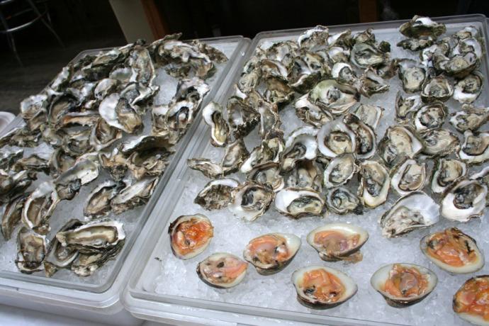 SFFM oysters