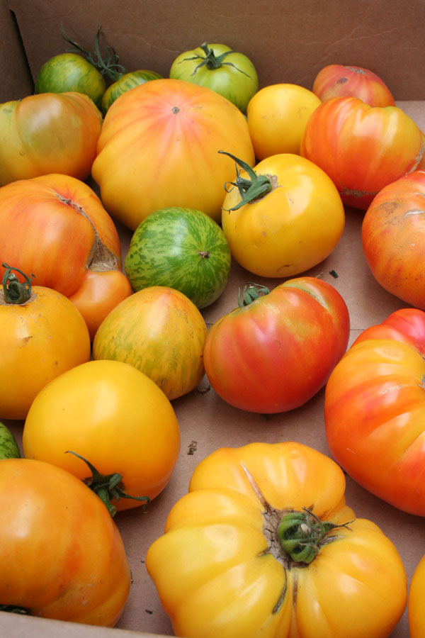 SFFM-yellow heirloom tomatoes