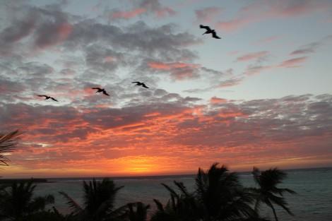 Soliman Bay Sunrise pelican patrol