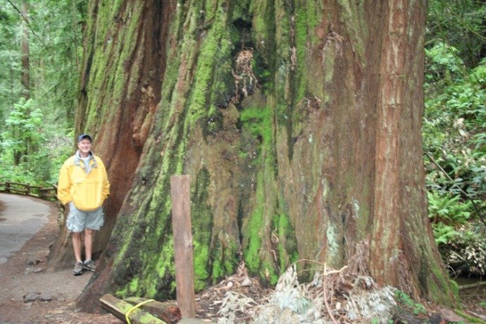 Wally, big redwood
