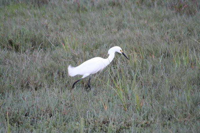 white water bird hunting, larkspur