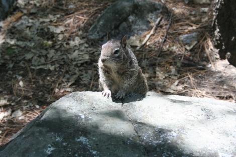 Yose-squirrel