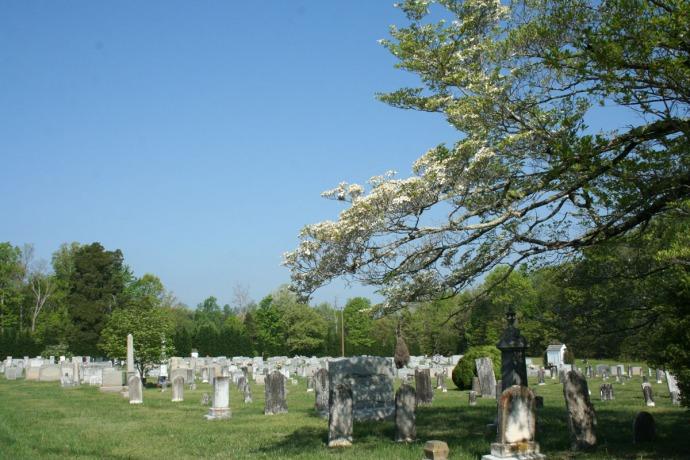 AC Mission Bap Cemetery, dogwood