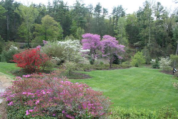 biltmore azalea garden 1
