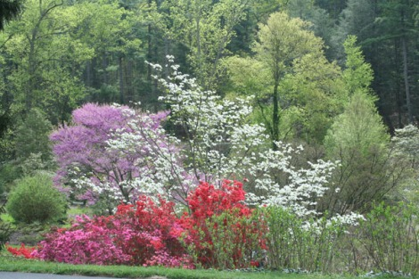 biltmore azelea garden 2