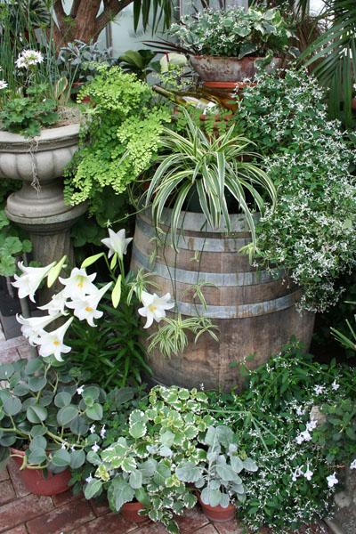 biltmore barrel, plants