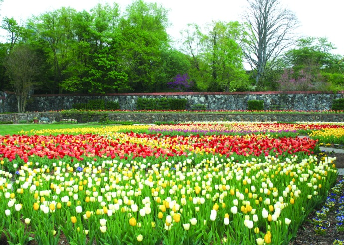 biltmore tulip garden, hori