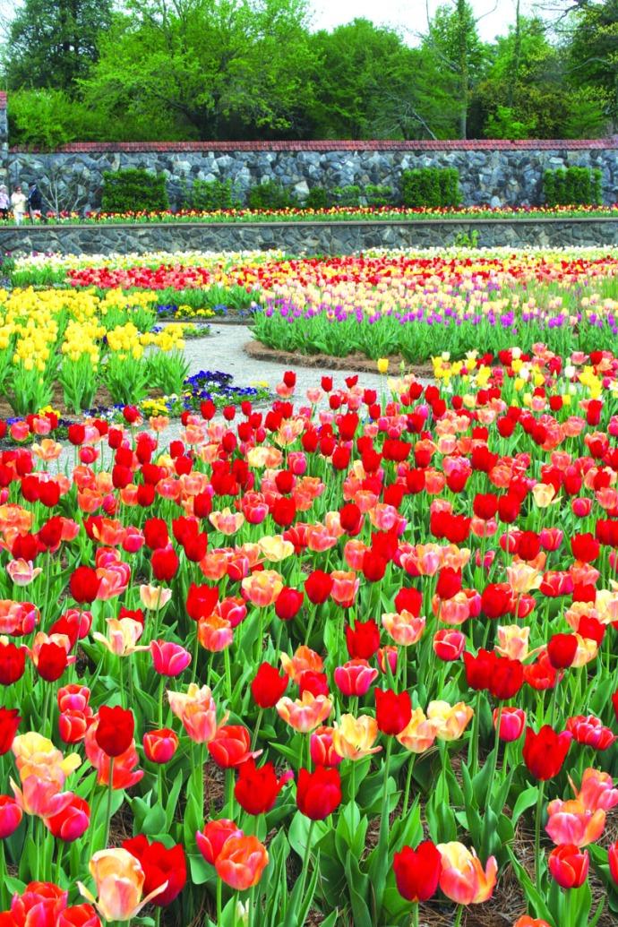 biltmore tulip garden vertical
