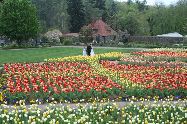 biltmore, wedding in tulip garden