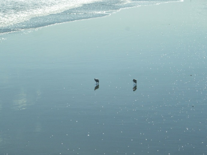 Kiawah Island sandpipers