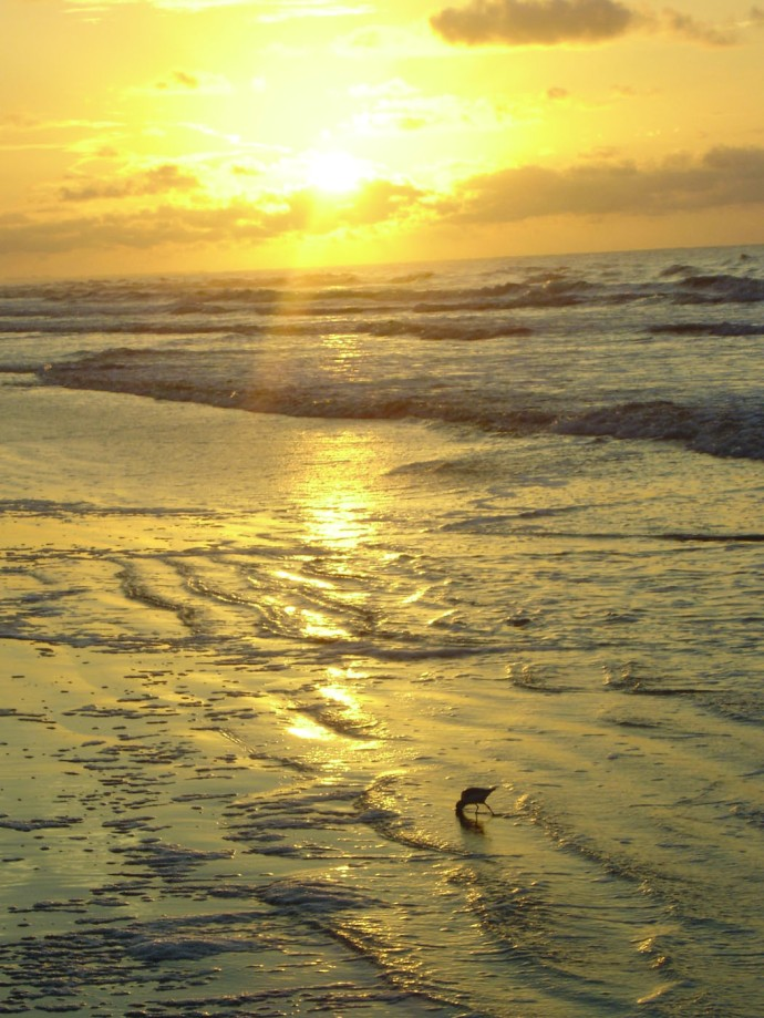 Kiawah sunrise, vert sandpiper