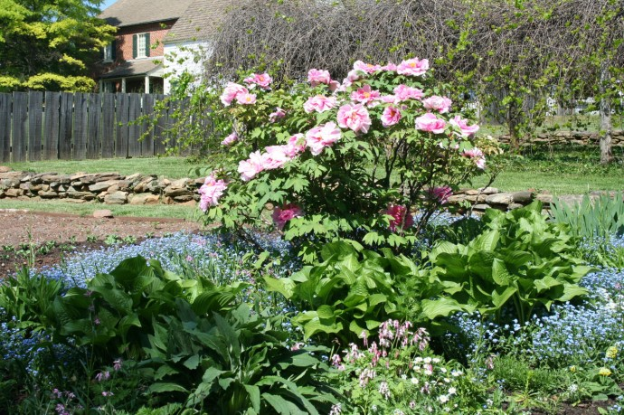 Old Salem gardens