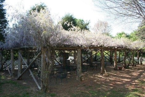 Old Salem wisteria arbor