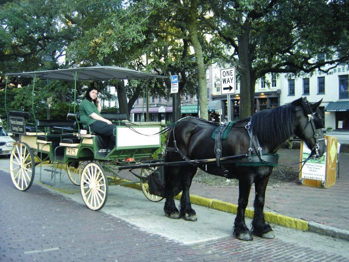 Savannah horse and wagon tour