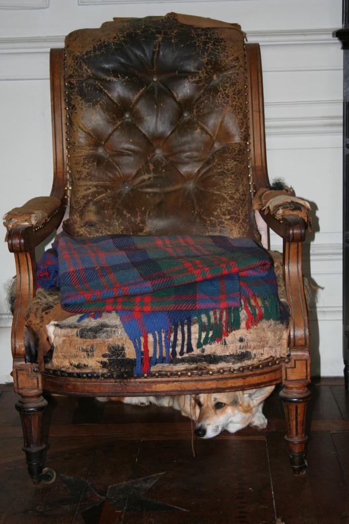 Egling corgi under chair