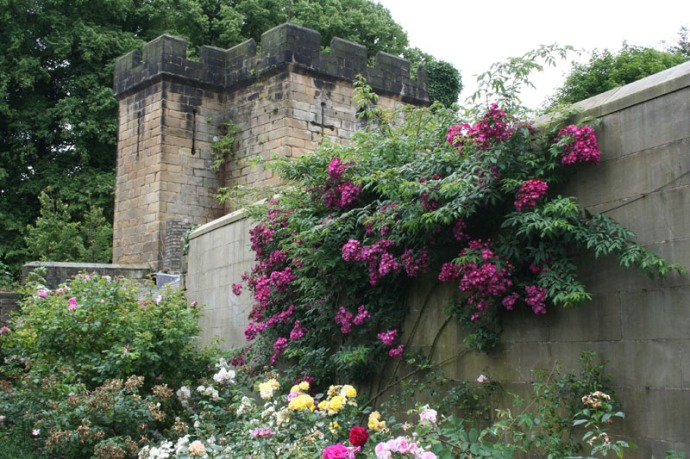 eng-alnmouth castle wall flowers