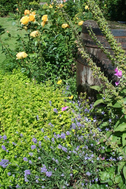eng-ogles castle flowers