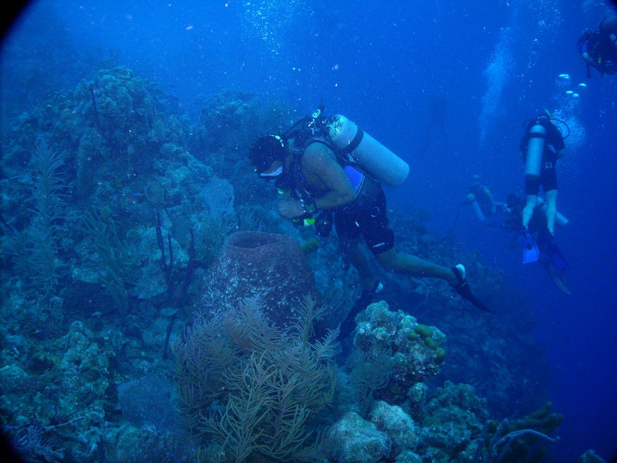 Diving Belize, Ambergris Caye