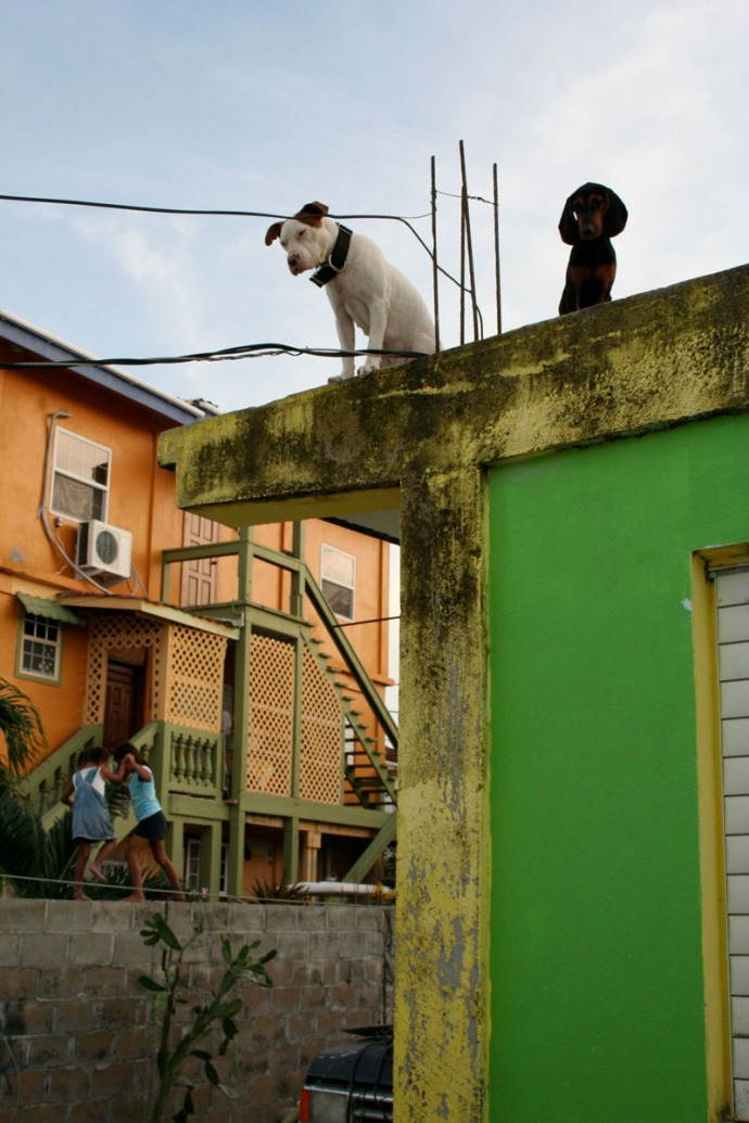 Belize, dog on roof