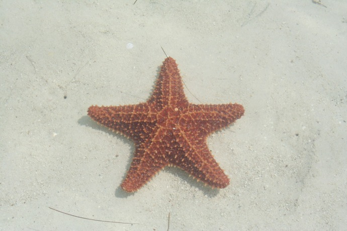 Belize starfish underwater